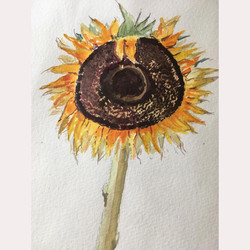 Sunflower by