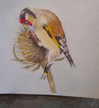 Bird 2 by Fran