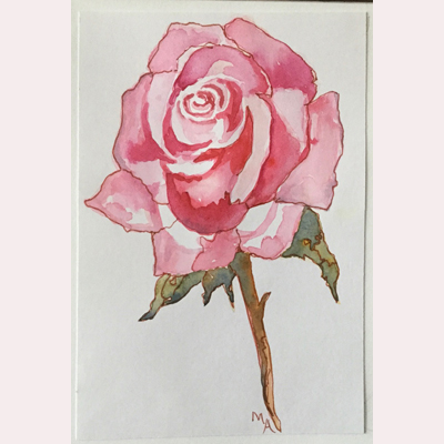 Rose in watercolour by Maureen