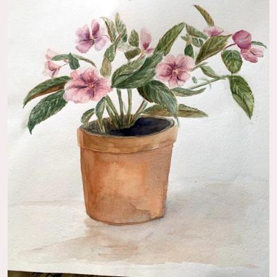 Garden flowers by Anna