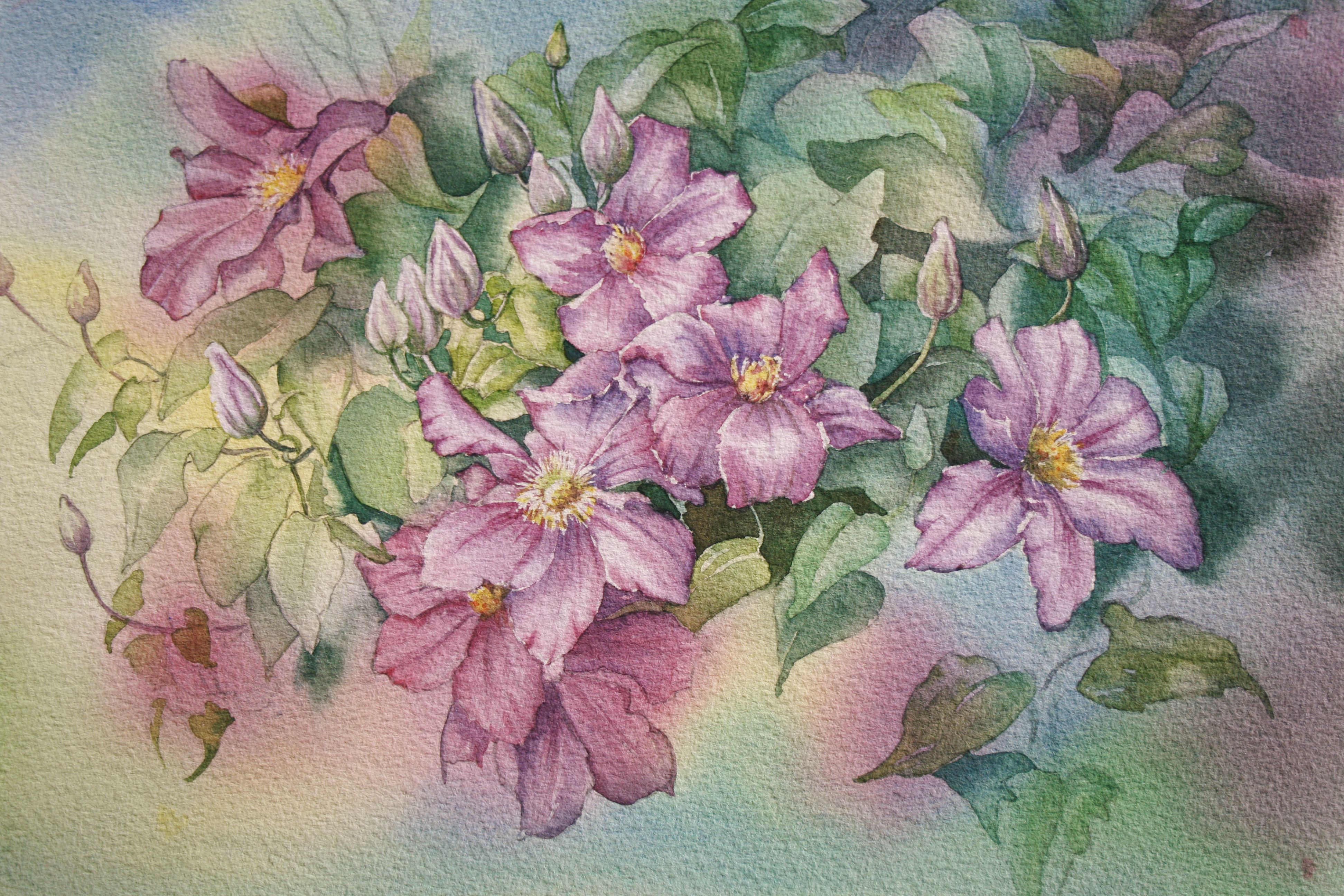 Glenys's Purple Clematis