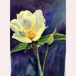Garden flower by Dee