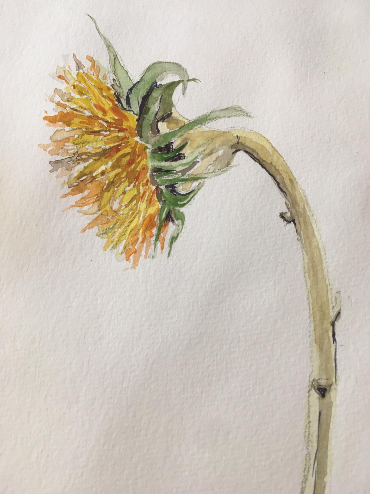 A sunflower 2 by Dee