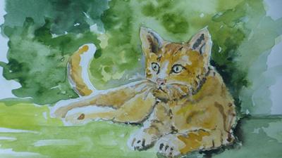 Animal by Nicola