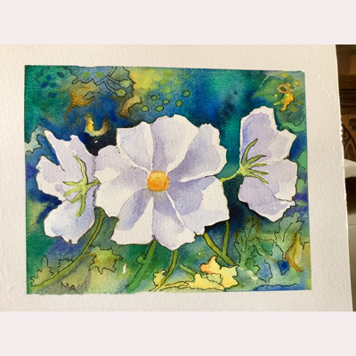 Pen and wash Cosmos by Maureen