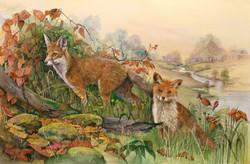 Glenda's Foxes