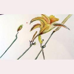 Garden flowers 2 by Dee