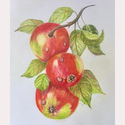 Apples by Maureen