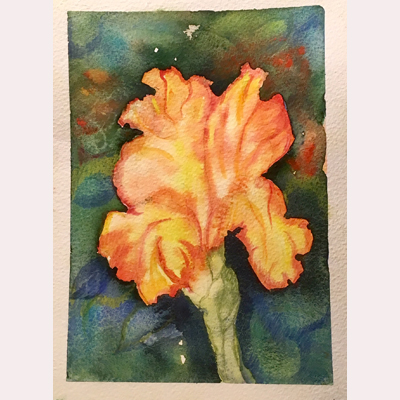 Iris in watercolour by Maureen
