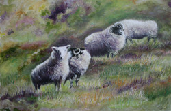 Lynette's Sheep