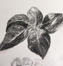 charcoal leaf by Maureen