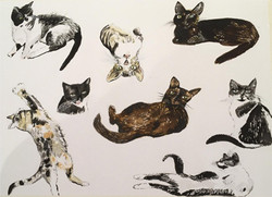 Cats by Dee