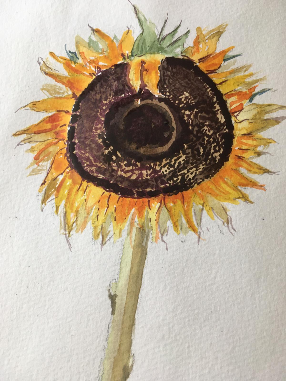 A sunflower 1 by Dee