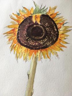 A sunflower 1 by Dee