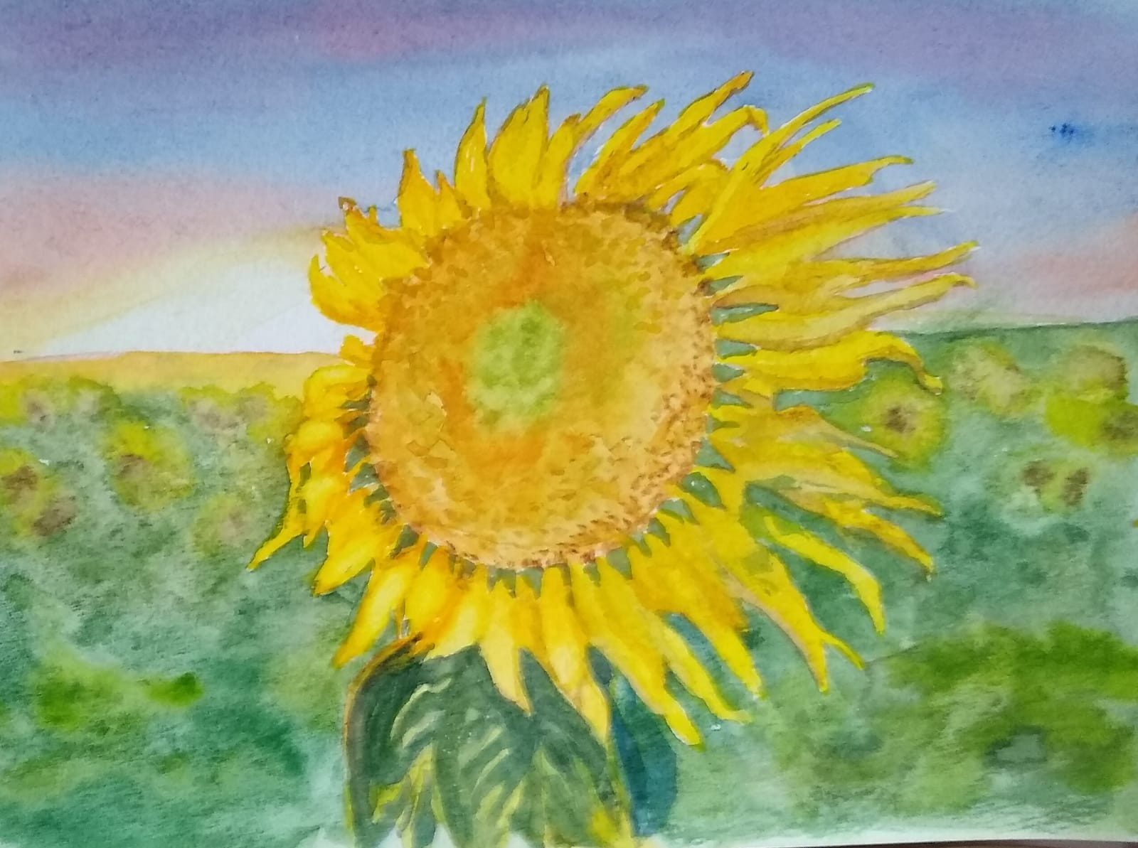 A sunflower by Fran