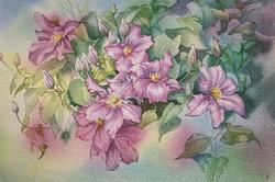 Glenys's Purple Clematis