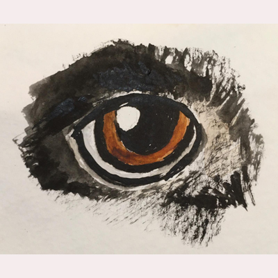 An animal eye by Dee