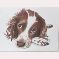 Animal by Maureen