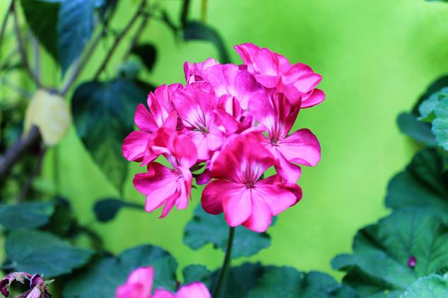 Flowers of the garden