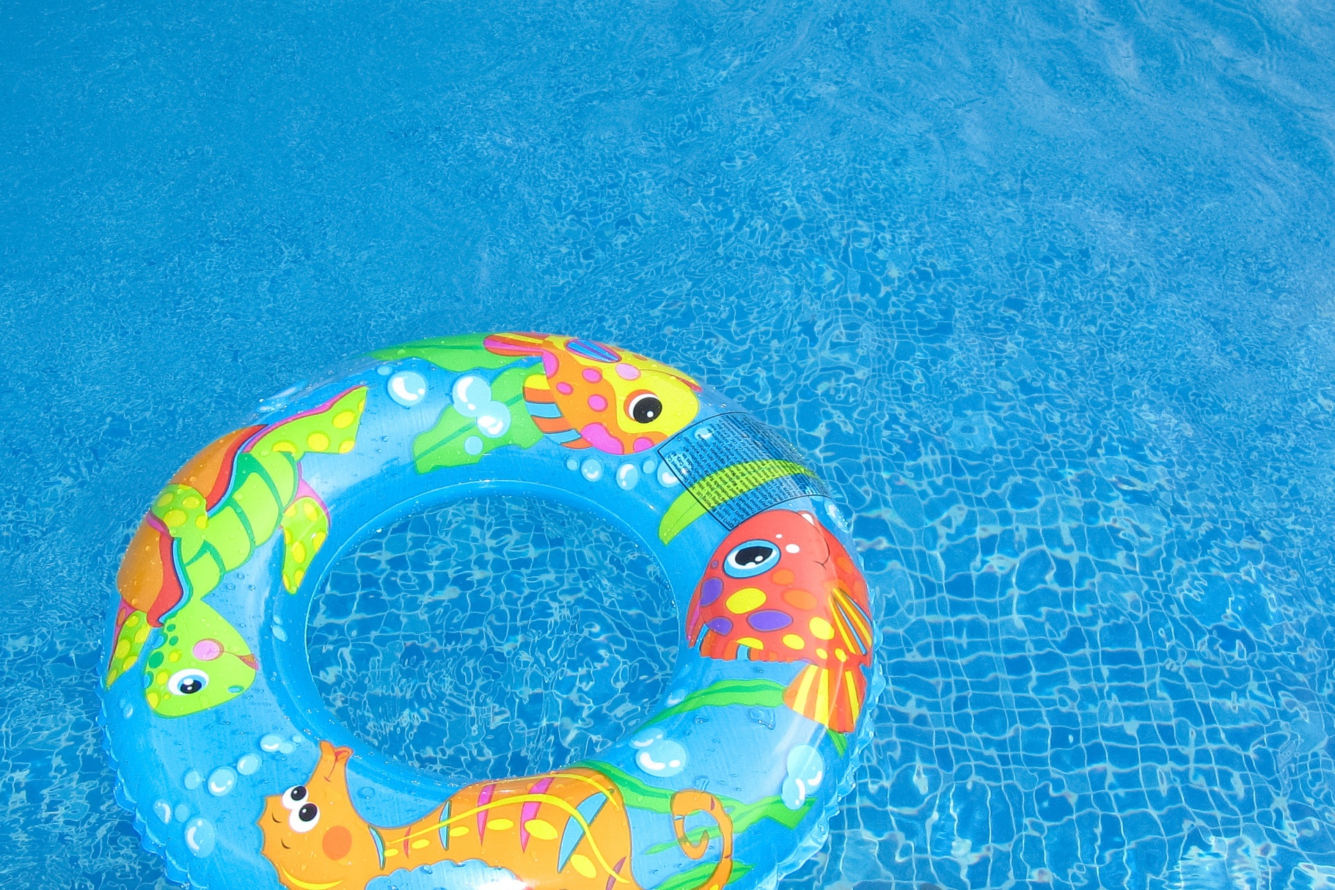 swim-ring-in-a-pool-1442997122WLk