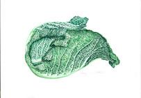 Cabbage 1xxx.jpg
