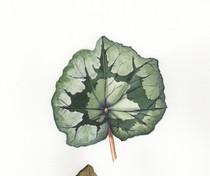Painting Activity 7 -Leaves.jpg