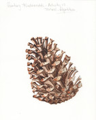 Painting Activity 12 - Textural Repetiti