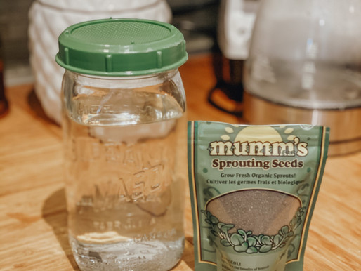 Broccoli Sprouts - How to Sprout Your Own & Why