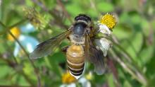 Wesley's Tropical Wild Honey – Premium Tualang