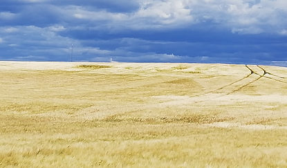 fält.jpg
