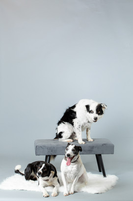 Dogs/JLR Portrait Studio.jpg
