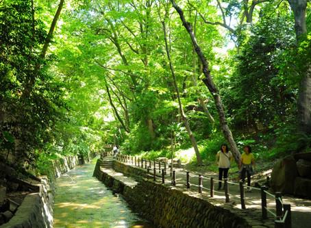 Nov.2(Sat) Field Trip to Todoroki Ravine 〜【11/2(Sat)】等々力渓谷へのフィールドトリップ開催!
