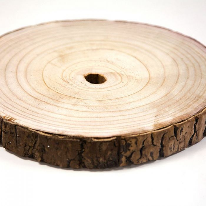 Woodslices hire