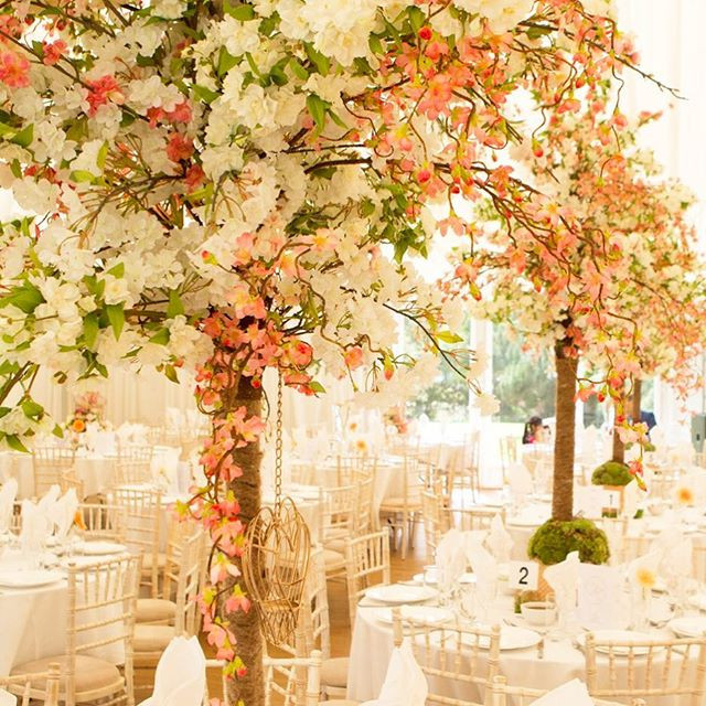 punnet and harry blossom trees BH.jpg