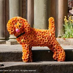 Raised standing dog Tributes