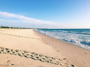 Vero Beach Turtle Tracks