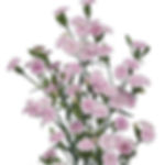 raffine-pia_2x.jpg