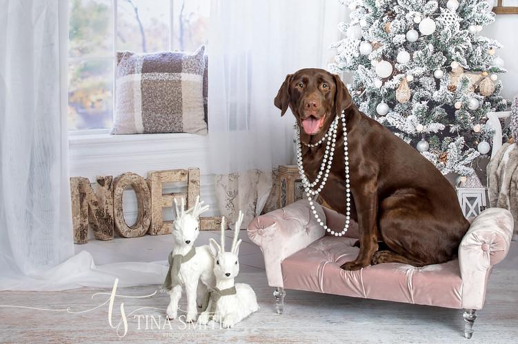 niceville photographer mini sessions christmas
