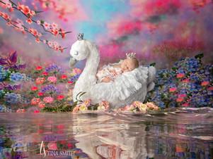 defuniak springs newborn photographer-1.