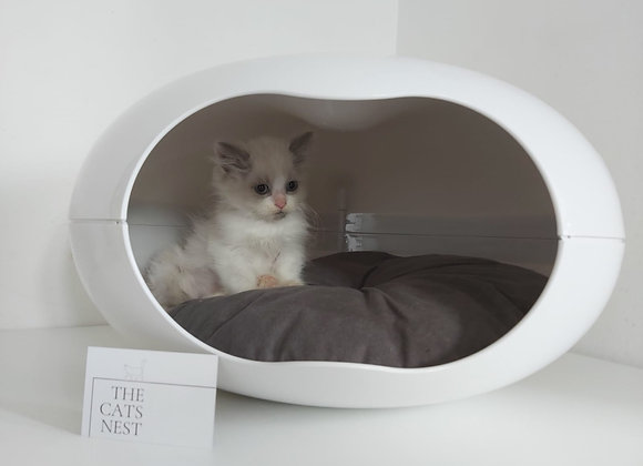 The Cats Nest Itself!