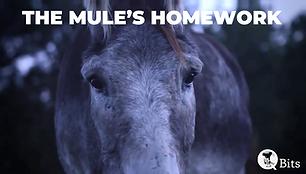 The Mules Homework.png