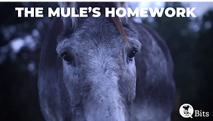The Mules Homework.png