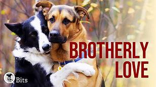 454 - BROTHERLY LOVE.jpg