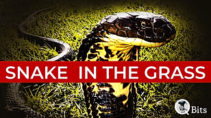 Snake In The Grass.png