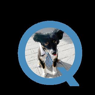 Q_GoodDog_Logo_blue060219.png
