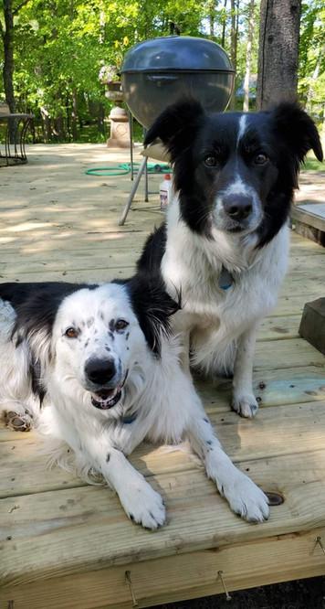 Tinker & Freckle Frannie