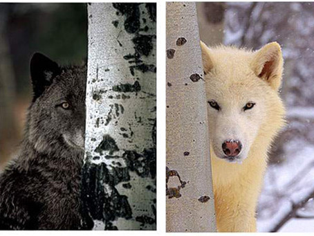 Hunting with The Godless Aspie: Rob Beasley and His Two Wolves