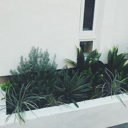 ジュエリーショップの花壇