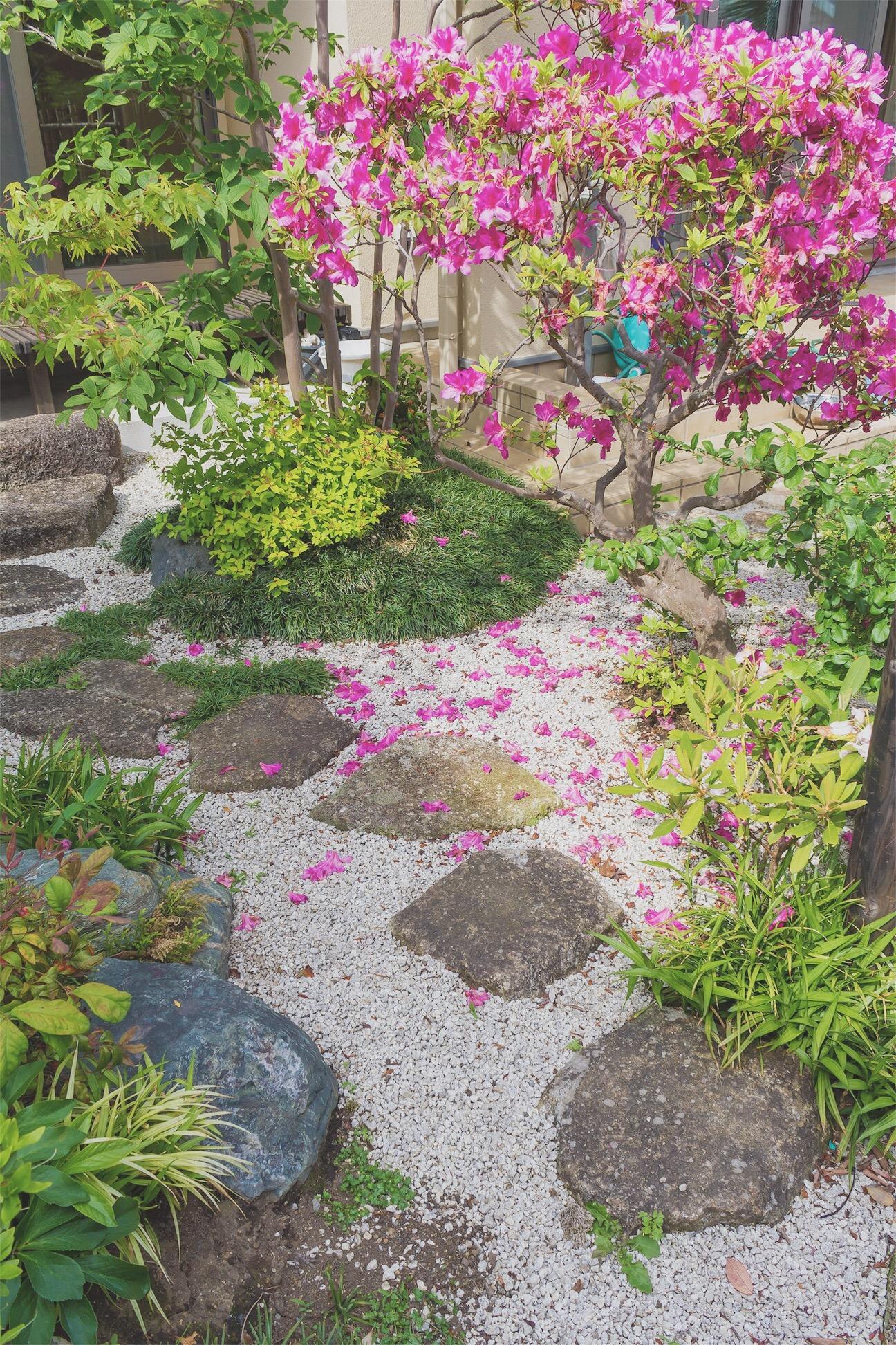 花散るツツジが乙な庭