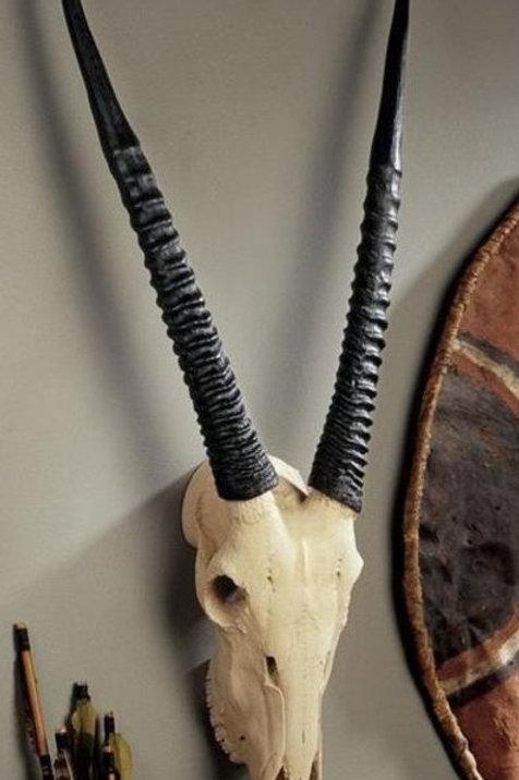 Gemsbok Skull